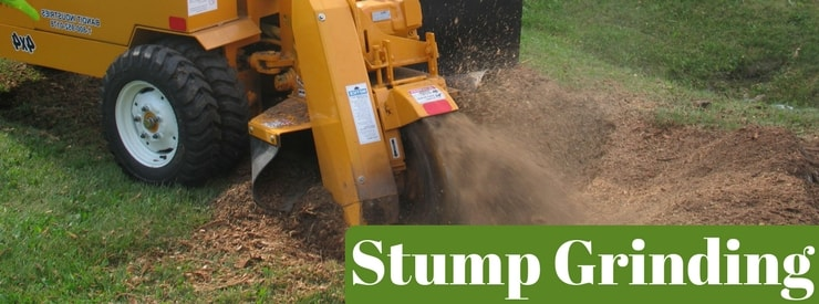 Stump Grinding Southern Iowa
