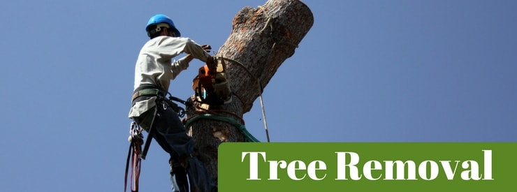 Tree Removal Southern Iowa, Northern Missouri