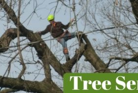Tree Services by Tom's Tree Service