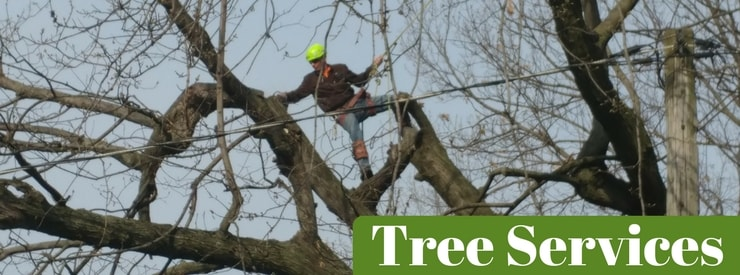 Tree Services in Mt. Pleasant, IA