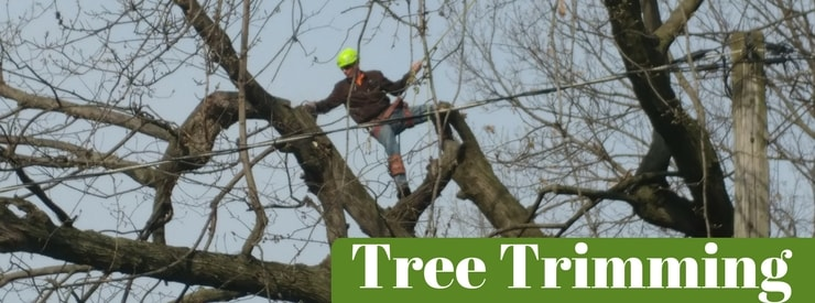 Tree Trimming Southern Iowa & North Missouri